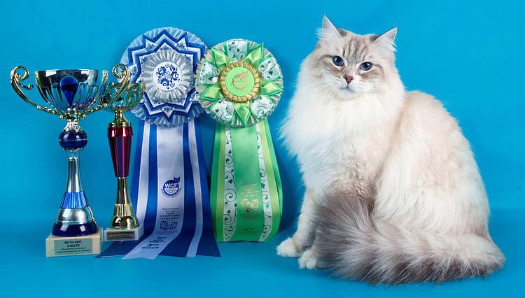 Маскарадных кошек и сибирских кошек