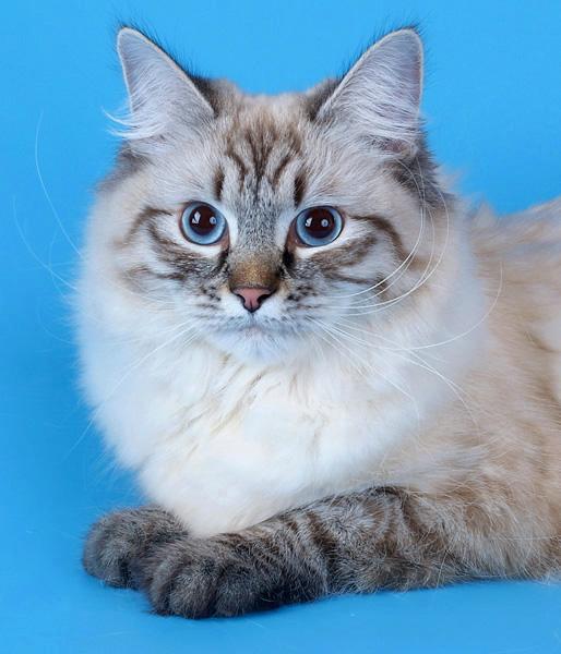 Фото кошек  FunKot